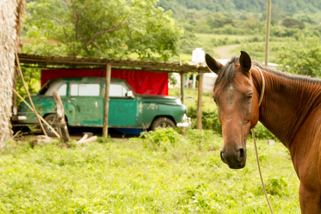 vinales horse riding