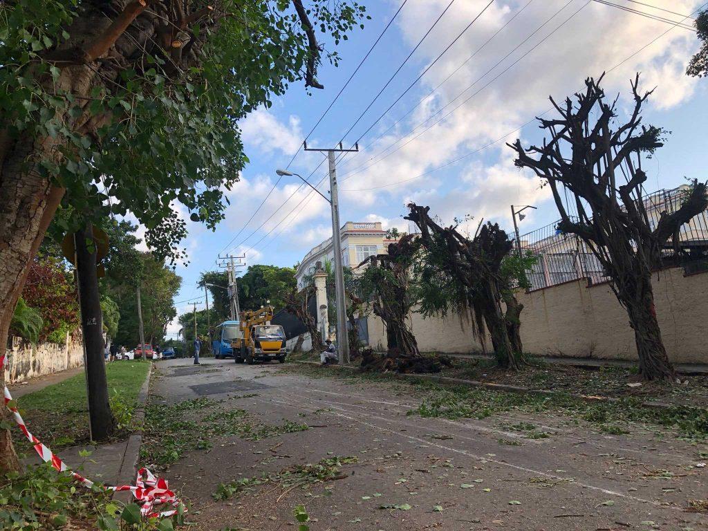havana trees being pruned