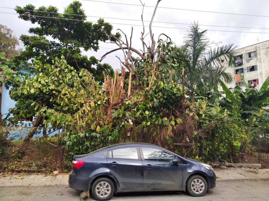 Havana trees and foliage loss