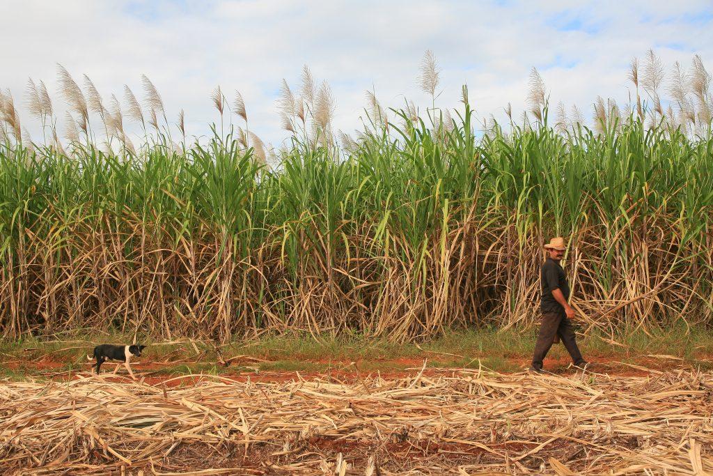 dogs in cuba farmer in sancti spirtus