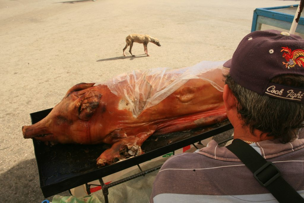 hungry dog in cuba