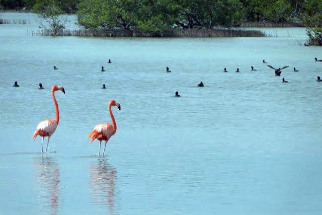 cuban birdwatching