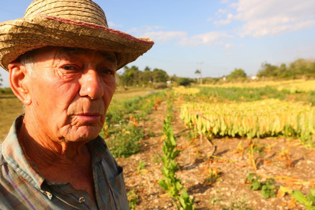 cuban tobacco farm in vuelta arriba, santa clara, cuba